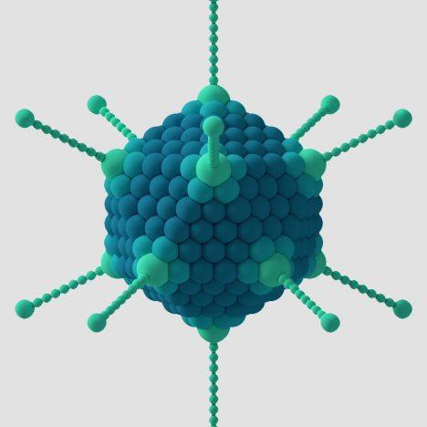Adenovirus Antibody