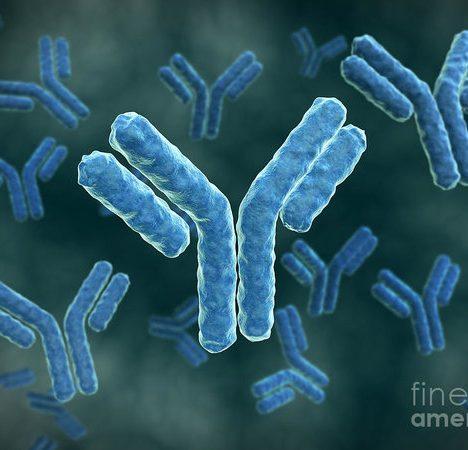 Alexa Fluor 647 Antibody