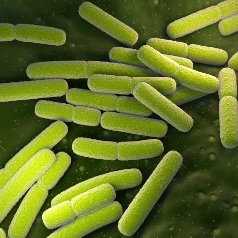 Anti-E.Coli Antibody