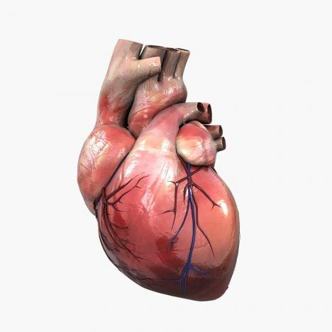 Heart Antibody