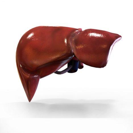 Liver Antibody