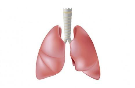 Lung Antibody