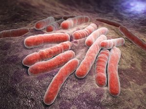 Mycobacterium Antibody