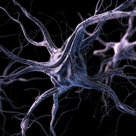 Nerve Antibody
