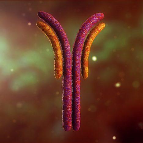 Tag Antibody